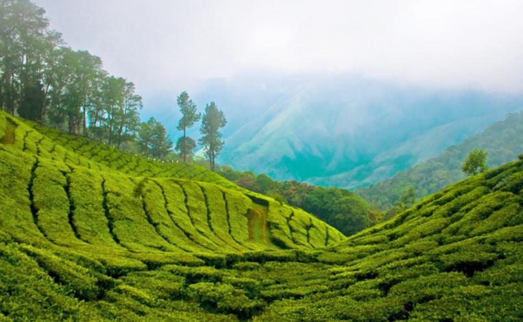 Kerala - 5N / 6D