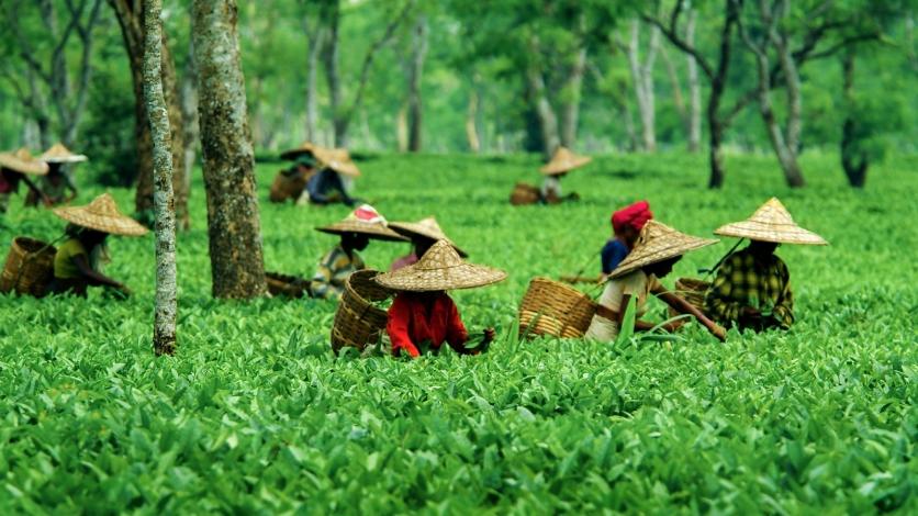 Assam (Guwahati & Shillong)